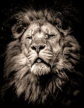 DanYell Lions