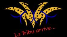 La tribu AMOUL SOLO